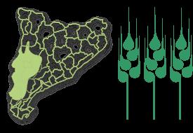 Zona secans