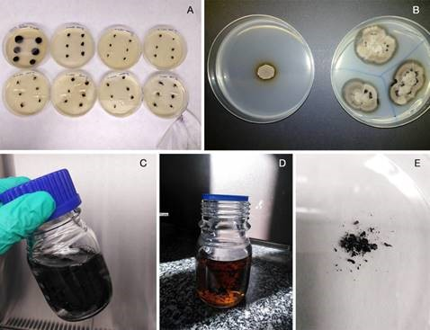 Photos of the processament of the new biomaterial