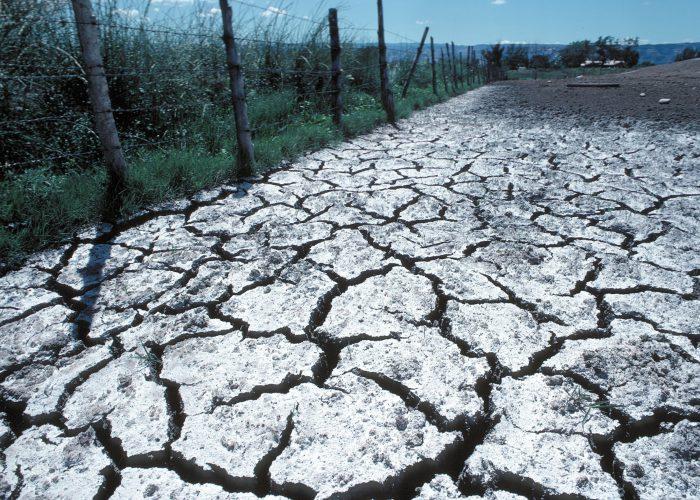 sòl salinitzat